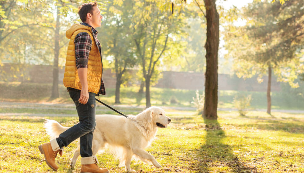 UA student walking his dog